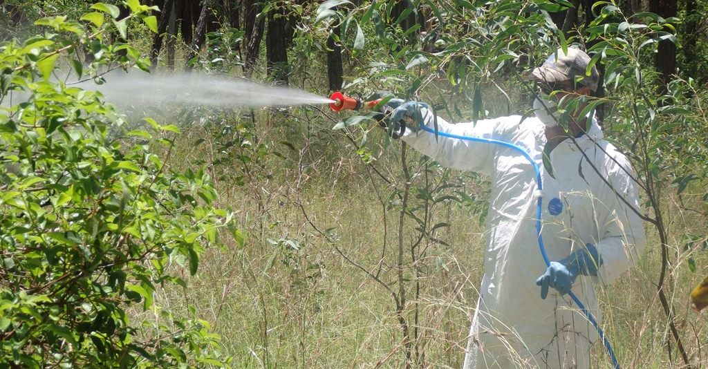 Lantana Spraying